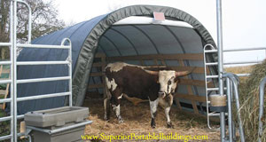 mdm shelter with bull
